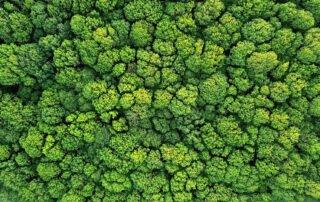 Imprimez votre logo végétal naturel sur support PVC